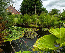 Newhouse Farm Bed & Breakfast: the pond